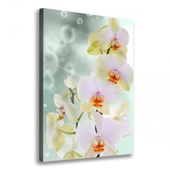 Foto obraz na plátně do obýváku Orchidej
