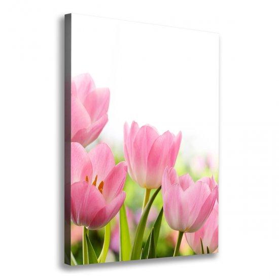 Foto obraz na plátně Růžové tulipány