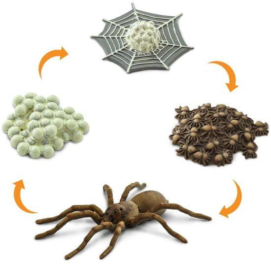 Safari Ltd. Životný cyklus - Pavúk
