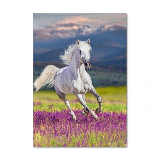 WALLMURALIA Foto obraz akrylový Bílý kůň cval 70x100 cm