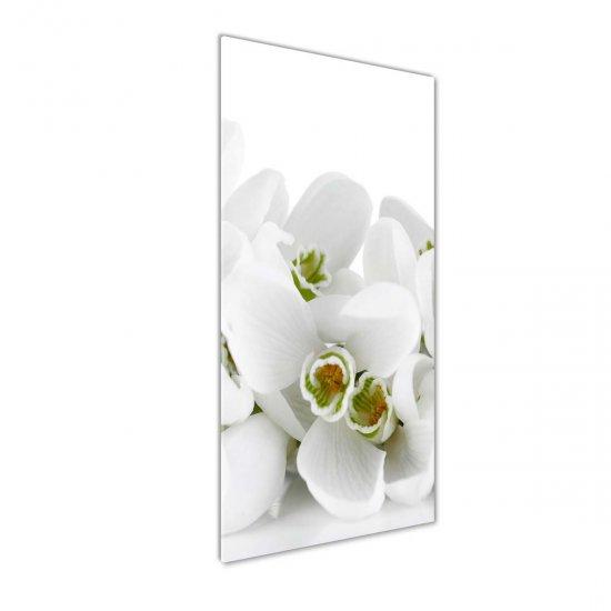 Fotoobraz na skle Bílo prvosenky