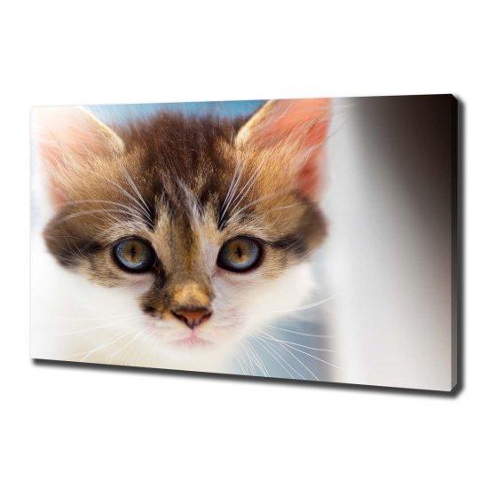Foto obraz canvas Malá kočka