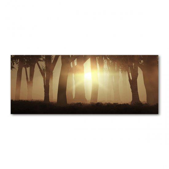 Foto obraz akryl do obýváku Mlha v lese