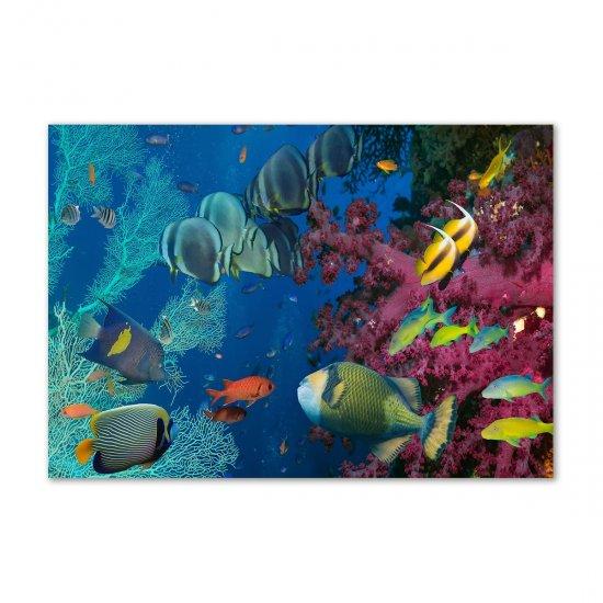 WALLMURALIA Fotoobraz na skle Korálový útes 100x70 cm