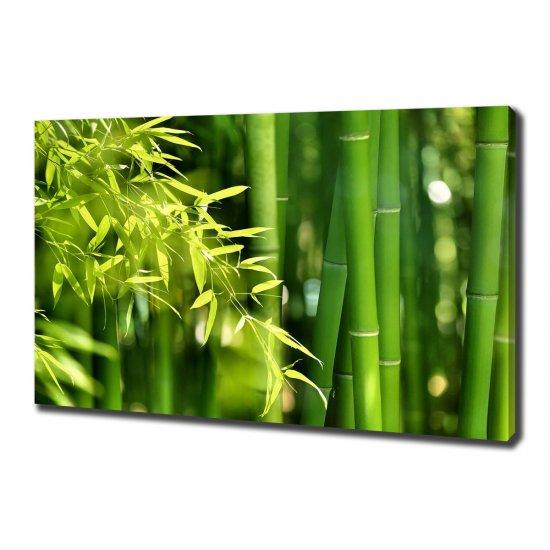 WALLMURALIA Foto obraz canvas Bambus 100x70 cm