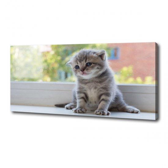 Foto obraz canvas Malá kočka u okna