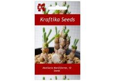 Kraftika 10 semen sukulentů Monilaria Moniliforme