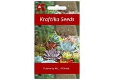 Kraftika 10 semen sukulentů Echeveria mix