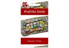"""Kraftika 10 semen sukulentů lithops, """"živé kamínky"""", mix"""