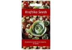 Kraftika 10 semen sukulentů Greenovia Aurea Gran Canaria