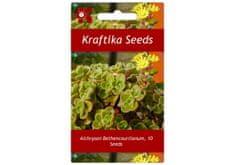 Kraftika 10 semen sukulentů Aichryson Bethencourtianum