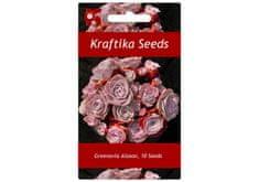 Kraftika 10 semen sukulentů Greenovia Aizoon, horská růže