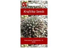 Kraftika 10 semen sukulentů Sinocrassula Yunnanensis