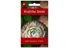 Kraftika 10 semen sukulentů Sedum Suaveolens