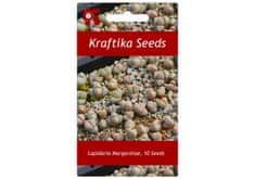 Kraftika 10 semen sukulentů Lapidaria Margaretae, Karoo Rose