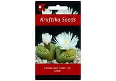 """Kraftika 10 semen sukulentů Lithops, """"živé kamínky"""""""