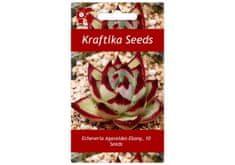 Kraftika 10 semen sukulentů Echeveria Agavoides Ebony
