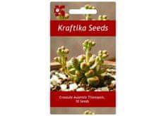 Kraftika 10 semen sukulentů Crassula Ausensis Titanopsis