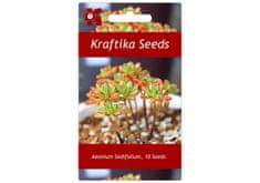Kraftika 10 semen sukulentů Aeonium Sedifolium, trpasličí sukulent