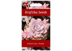 Kraftika 10 semen sukulentů Echeveria Laui