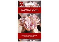 Kraftika 10 semen sukulentů Echeveria Simulans Laguna Sanchez