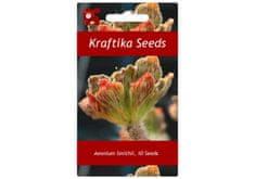 Kraftika 10 semen sukulentů Aeonium Smithii