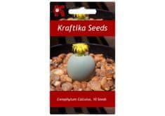 Kraftika 10 semen sukulentů Conophytum Calculus