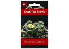 Kraftika 10 semen sukulentů Titanopsis Calcarea