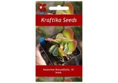 Kraftika 10 semen sukulentů Kalanchoe Rotundifolia