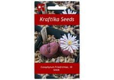 Kraftika 10 semen sukulentů Conophytum Friedrichiae