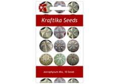Kraftika 10 semen sukulentů mix Astrophytum, květina pro štěstí