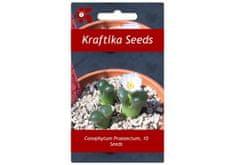 Kraftika 10 semen sukulentů Conophytum Praesectum Ophthalmophyllum
