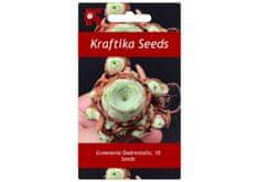 Kraftika 10 semen sukulentů Greenovia Dodrentalis, horská růže
