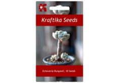 Kraftika 10 semen sukulentů Echeveria Runyonii San Carlos