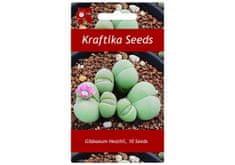 "Kraftika 10 semen sukulentů Gibbaeum Heathii, ""živé kamínky"""