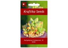 Kraftika 10 semen sukulentů Pachyphytum Compactum