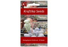 Kraftika 10 semen sukulentů Pachyphytum Oviferum