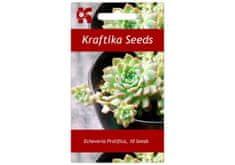 Kraftika 10 semen sukulentů Echeveria Prolifica