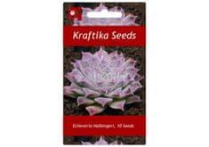 Kraftika 10 semen sukulentů Echeveria Halbingeri San Joaquin