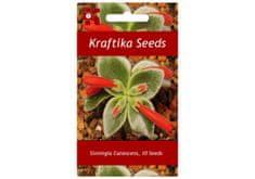 Kraftika 10 semen sukulentů Sinningia Canescens