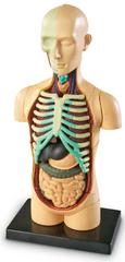 Learning Resources Anatomický model ľudského tela