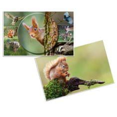 Herma podloga Živali, namizna, 55 x 35 cm