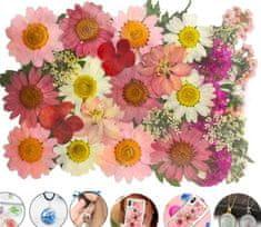 Kraftika Přírodní sušené a lisované květiny, hortenzie