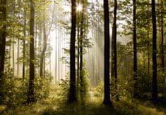 AG design fototapeta Čarobna šuma, 360 x 254 cm
