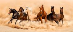 AG design fototapeta konie w galopie, 202 x 90 cm