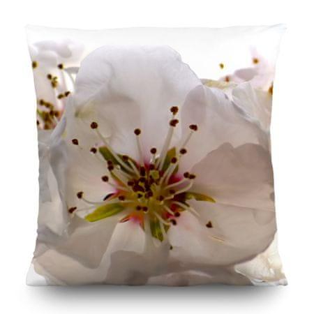 AG design Poduszka dekoracyjna Kwiat wiśni 45 x 45 cm