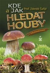 Kde a jak hledat houby - Rady zkušeného houbaře