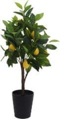 Koopman Citrónovník s plodmi, 70 cm