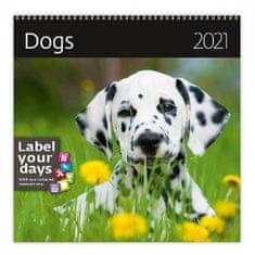 Kalendář 2021 nástěnný: Dogs, 300x300