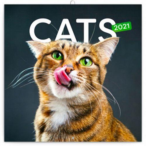 Kalendář 2021 poznámkový: Kočky, 30 × 30 cm